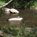 Nantahala River Lodge - Smoky Mountain Wildlife in the Nantahala River