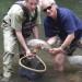 Nantahala River Lodge - Fly Fishing Lesson in the Nantahala River in the Smoky Mountains